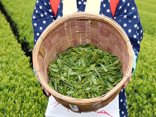 世界にも名が通った、京都宇治の厳選茶葉